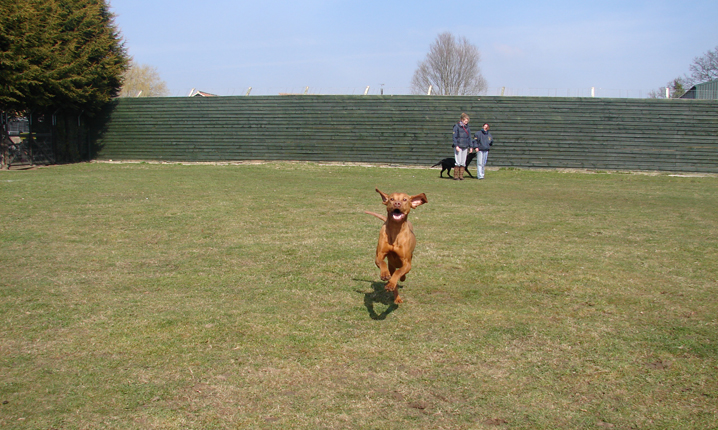 Dog exercise paddocks 024 (15)