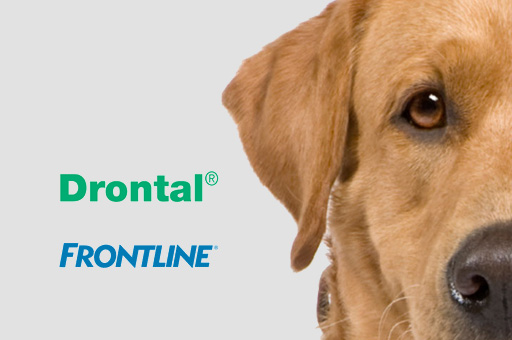 dog frontline advert