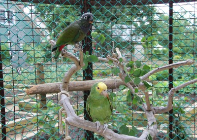 amenities-tropical-aviary