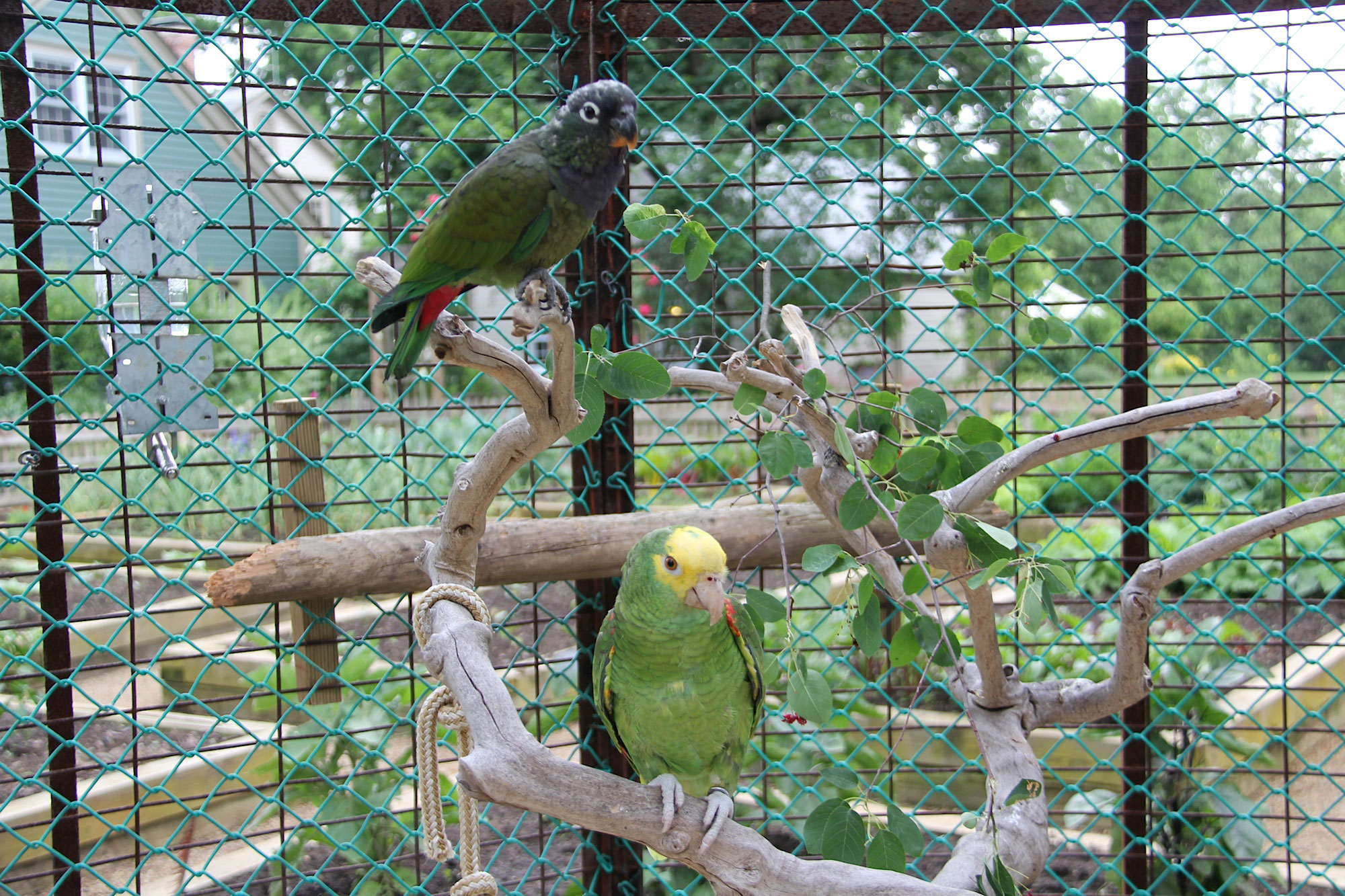 amenities-tropical-aviary