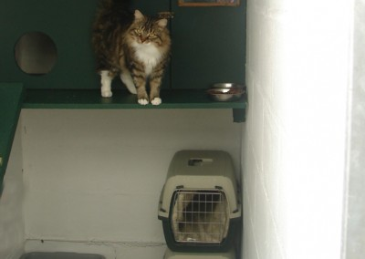 cattery  03.04.09 015