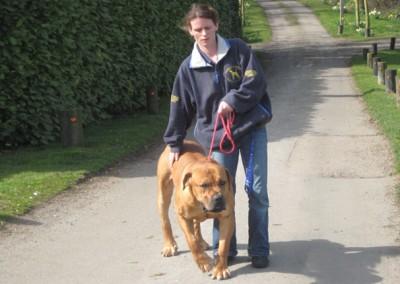 dog walking 003 (2)