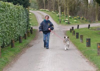 dog walking 045 (1)