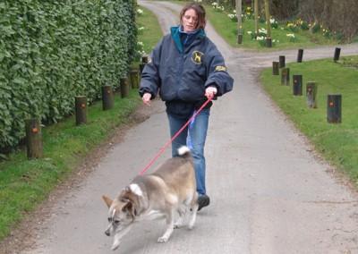 dog walking 045 (2)