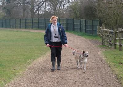 dog walking 045 (4)