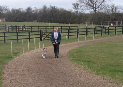 dog walking 045