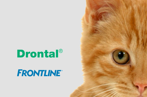 cat frontline advert