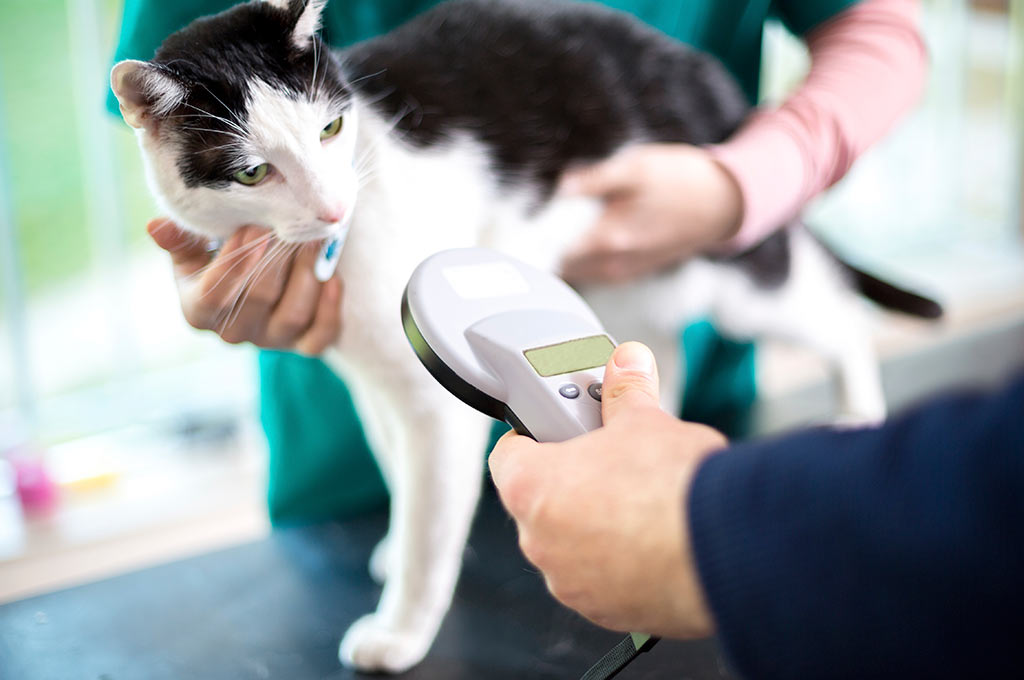 cat microchipping