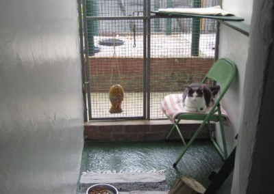 q cattery