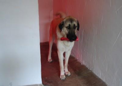 q dog (2)