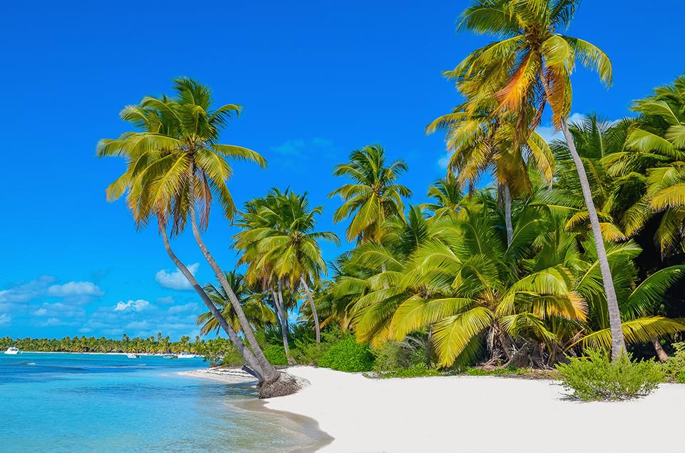 Carribean beach with palm trees