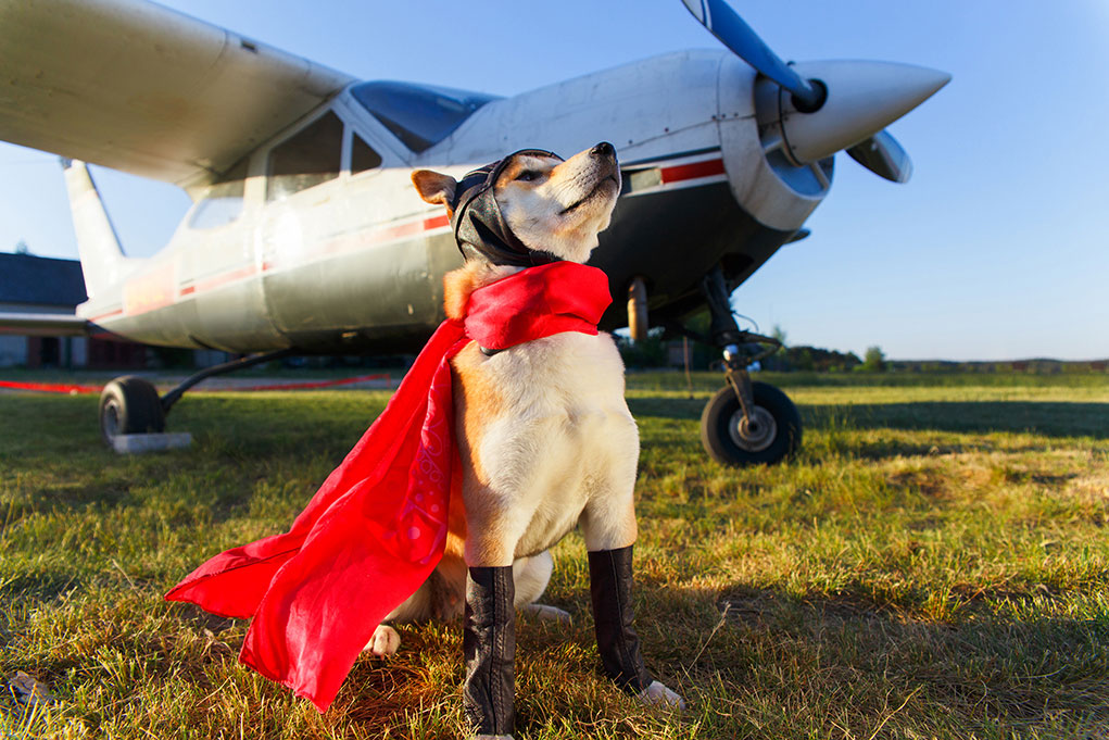 London-and-Essex-Pet-export-flying-dog