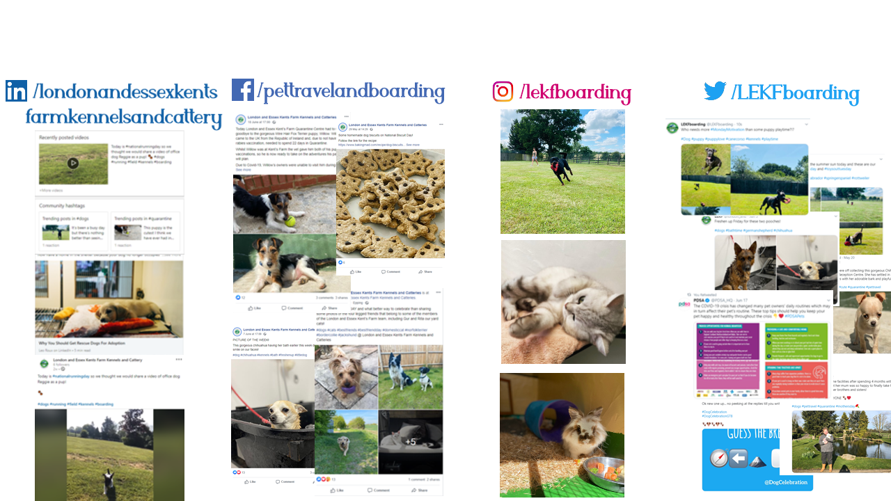 social media trial